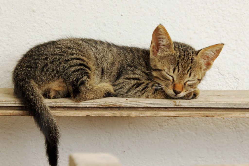 matanelli-spici-kotatko