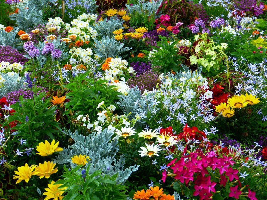 matanlli-rozkvetla-zahrada